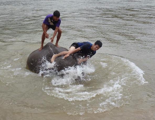 世界遺産の町ルアンパバーン近郊で象使い修行 川に振り落とされる